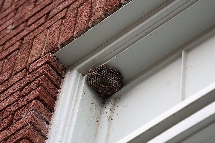 We provide a wasp nest removal service for domestic and commercial properties in Halstead.